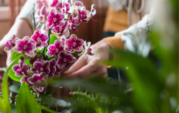 Orquídeas cultivo